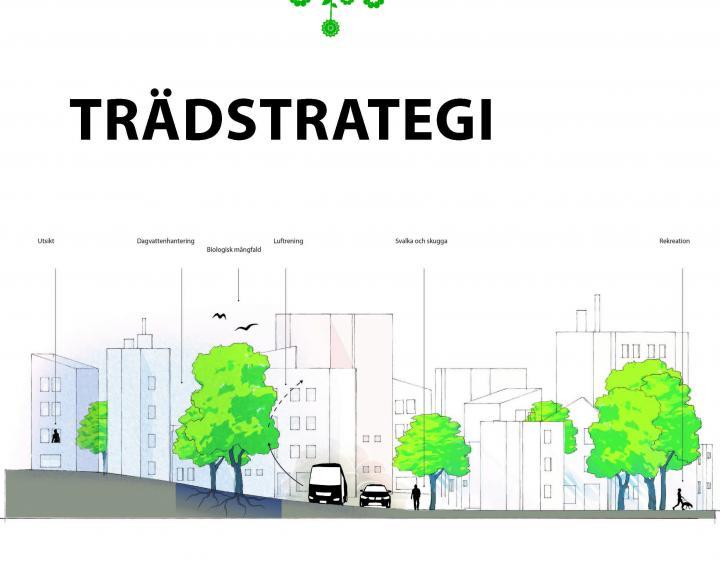 Tree Strategy of Malmö